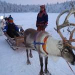 filandia safari con le renne